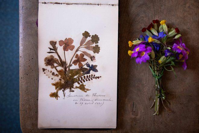 Helenes_herbarium_wild_flowers 6