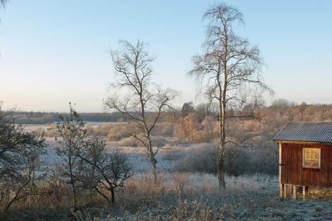 Winter morning at Björkåsa
